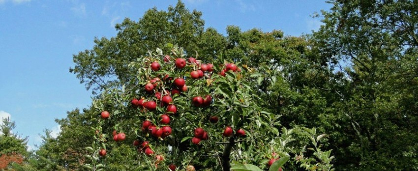 Apple Picking Orchard VT New England Fall Events